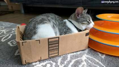 Cat in a box with a cat toy