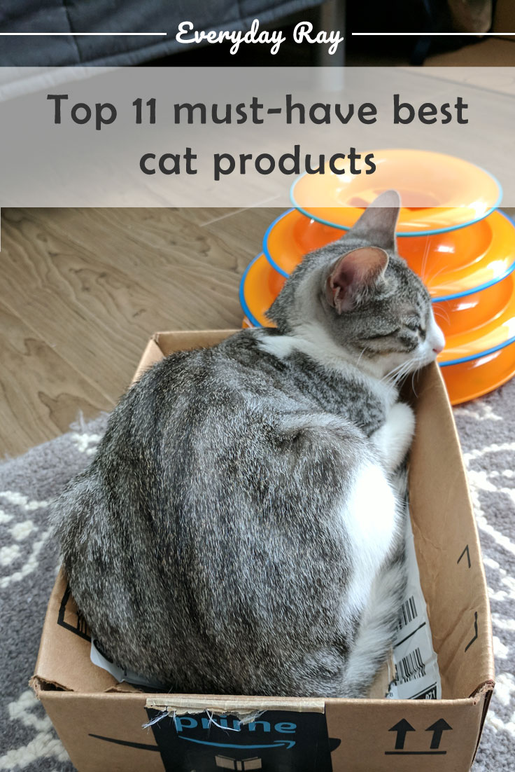 Cat in a box with cat toy